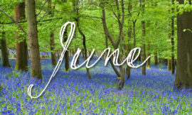 June Astrology Self Development Worksheet with Empowering Astrology Now Available