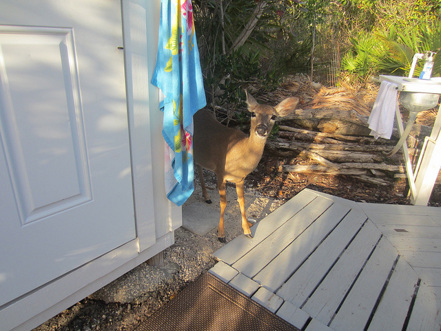 Florida Keys: Big Pine Key, Key Deer And Kayaking